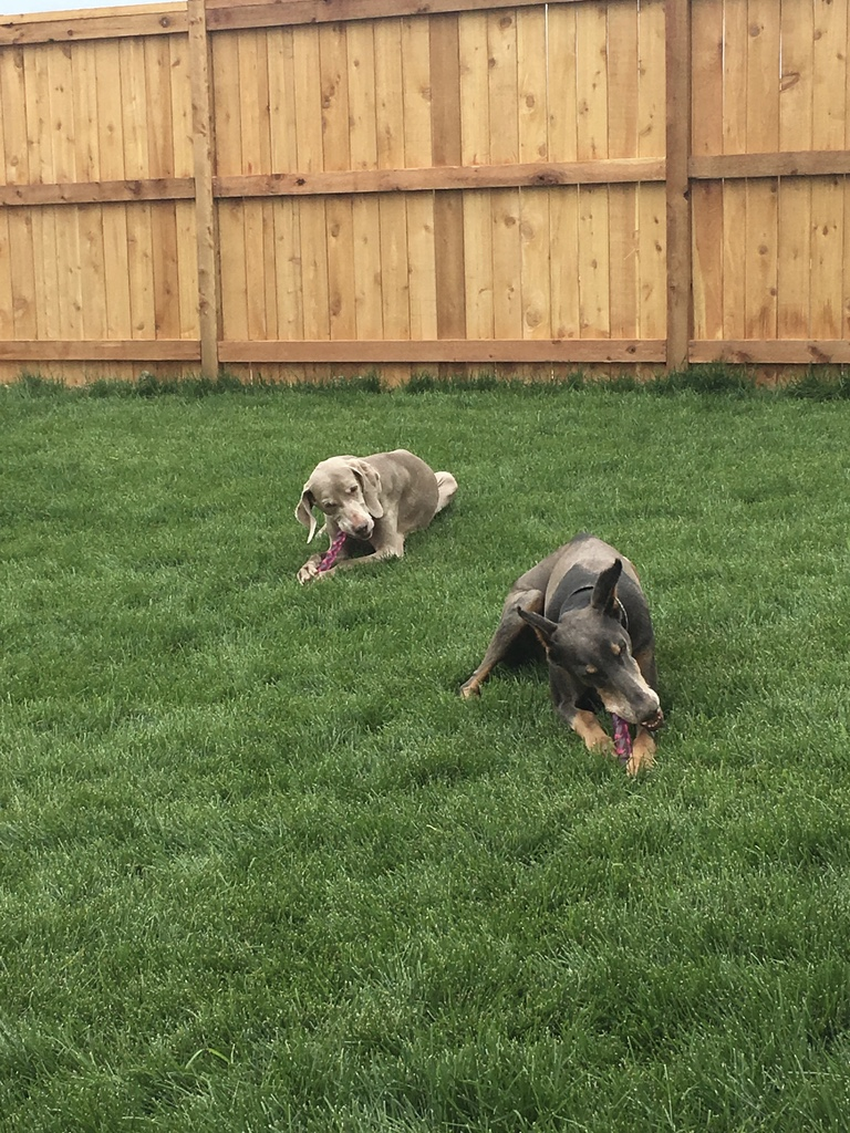 Bella and Haley Playing